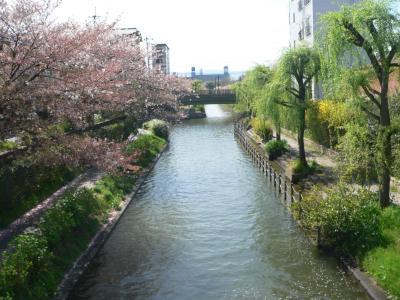 今年最後の桜を十分に堪能した伏見の宇治川支流