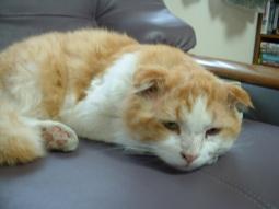 kitty 120323