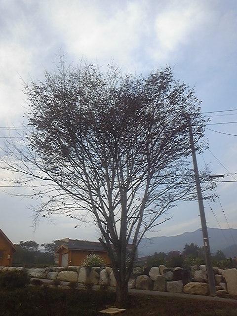 なんだかハートの木?のような・・・