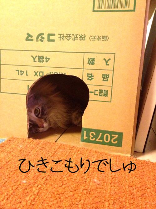 1_20130508133745.jpg