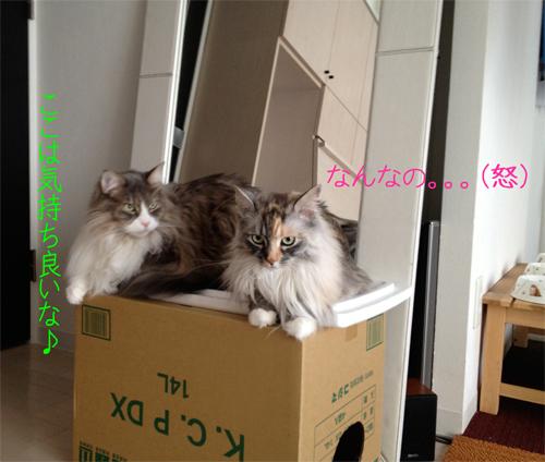 2_20130517123745.jpg