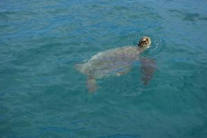 ウミガメの写真