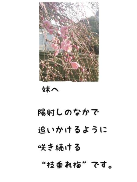 fc2blog_20130308175341f39.jpg
