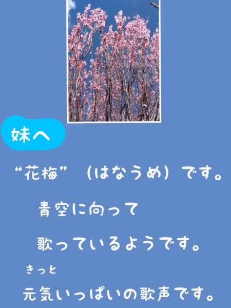fc2blog_20130316191448601.jpg