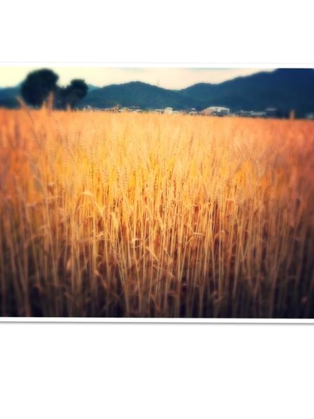 fc2blog_20130526172214da0.jpg