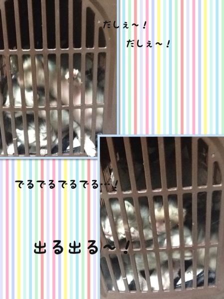 fc2blog_20130703182523148.jpg