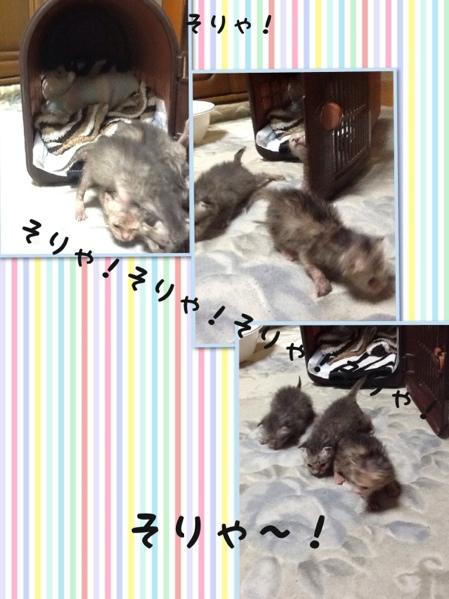 fc2blog_20130703182533b71.jpg