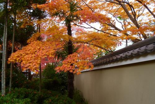 土塀と紅葉