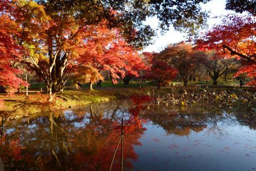 京都府立植物園(紅葉)