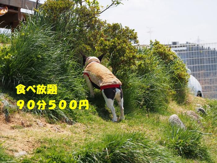 10_20130428225632.jpg