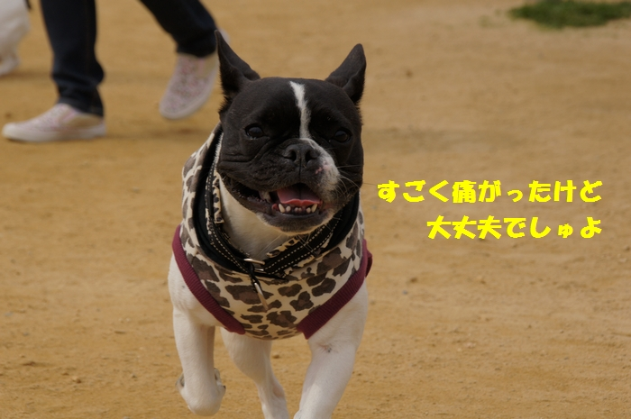 12_20130403215816.jpg