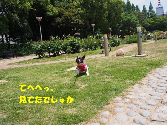 14_20130610181932.jpg