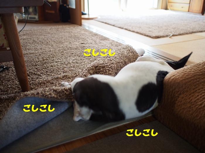 15_20130525154714.jpg