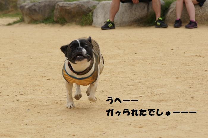17_20130605151013.jpg
