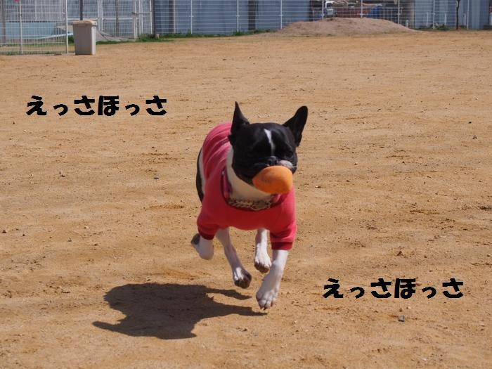 5_20130328200651.jpg