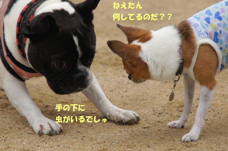 7_20130717145225.jpg