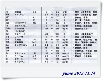 yume13-11-24-2.jpg