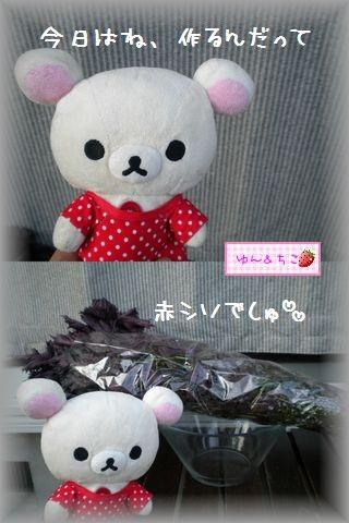 ちこちゃんの観察日記2011番外編その2赤紫蘇もらったの-1