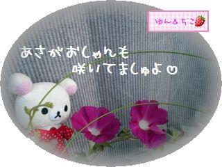 ちこちゃんのあさがお観察日記★20★1個目が咲いたよ-3
