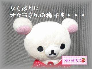 ちこちゃんの観察日記2011★19★オクラさんこんにちは-1