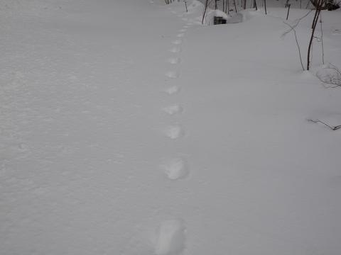 足跡・・・・