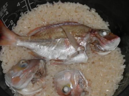 20110924鯛飯