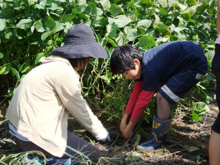 芋掘り体験-24