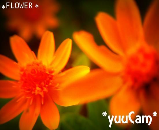 201110060292+-+繧ウ繝斐・_convert_20111008191025