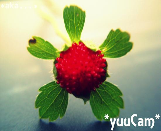 PICT0285+-+繧ウ繝斐・_convert_20111025150324