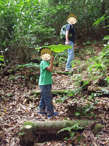 辻岳登山道途中