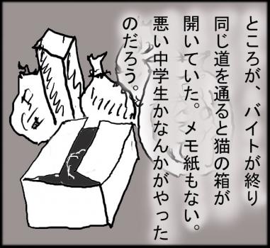 猫箱004
