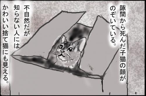 猫箱005