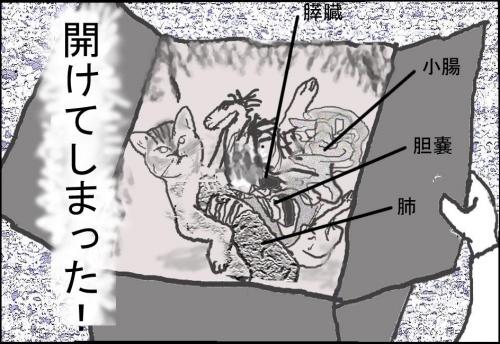 猫箱008
