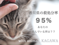 with animals KAGAWA