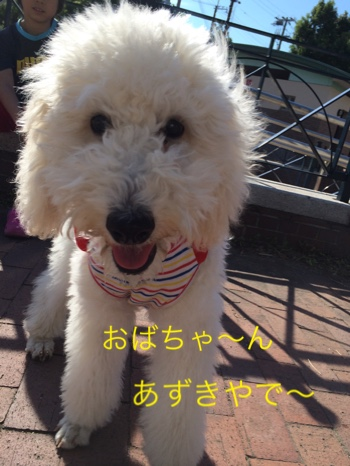 fc2blog_20140923210022c75.jpg