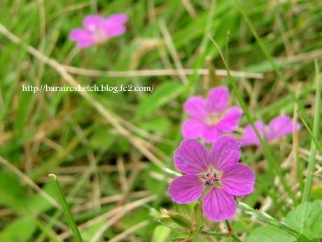 公園の花ピンク-001