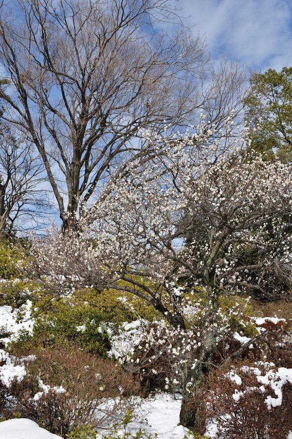 Tokyo Snow Scene~④春を彩る木々たちのそれぞれ