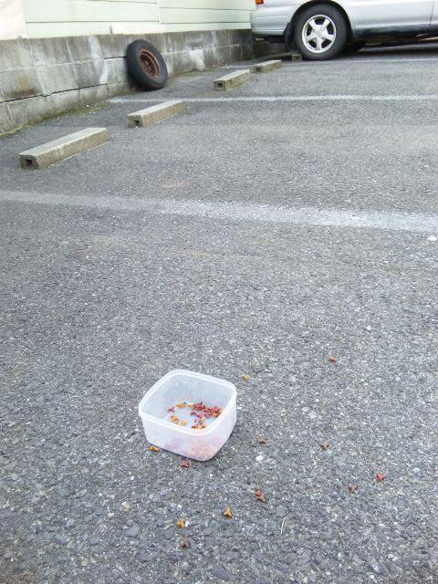 兵庫区駐車場餌やり