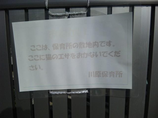 神戸市垂水区保育所内餌やり