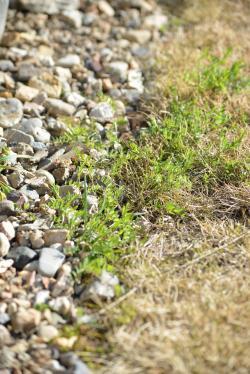 Garden-3_20130311.jpg