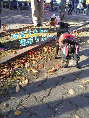 fc2_2013-12-02_19-46-05-370.jpg