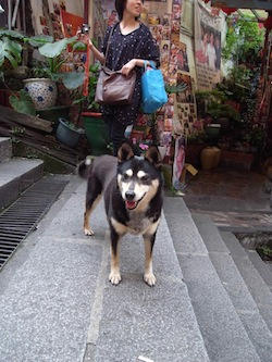 羊の国のラブラドール絵日記、台湾写真11