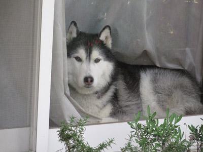窓辺のポっちゃん