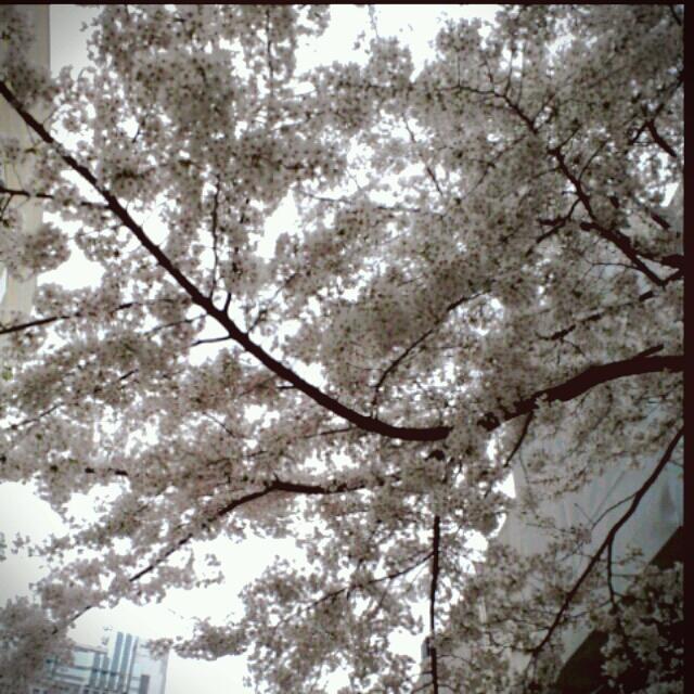2013-04-01_15_34_34.jpg