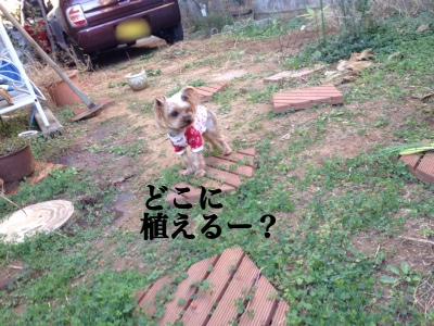 fc2blog_20131205212746bd6.jpg