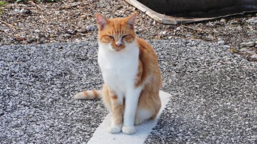 102004ライン猫_convert_20111027150038