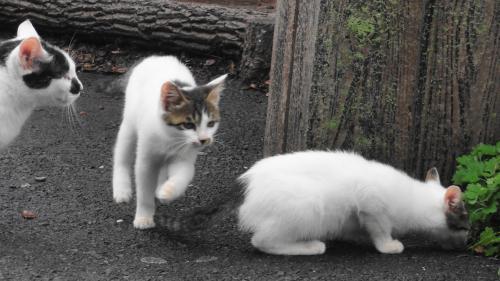102202国道321号叶崎の猫_convert_20111027170345