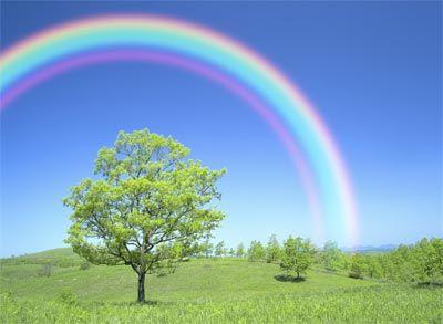 rainbow-3-256brex.jpg