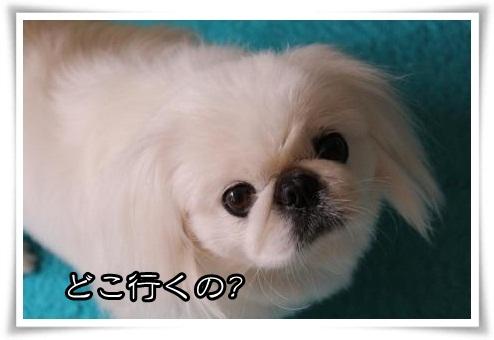 3_20120426153601.jpg
