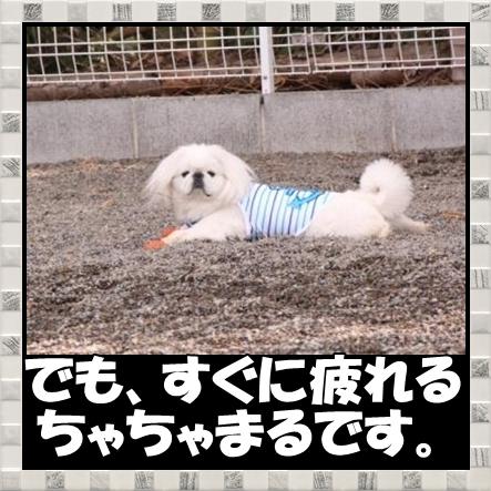 4_20120418163107.jpg